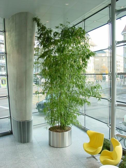 topf pflanzen indoor nino 39 s g rten. Black Bedroom Furniture Sets. Home Design Ideas